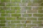 Moos- und Algenwachstum an Außenmauern